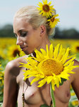 Adele B Tournesol By Tony Murano - Picture 18